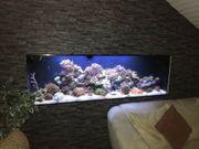 Meerwasseraquarium der Spitzenklasse