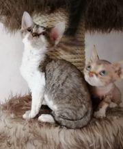 Süße Kätzchen suchen ein neues