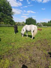 Suchen Stall für 5-10 Pferde