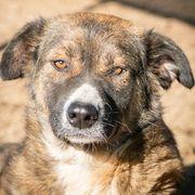 Themira vom Hundegarten wer verliebt