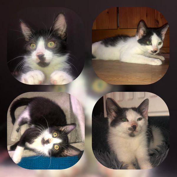 Kitten Antony und Victoria 3
