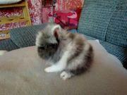 Kleine Mini Farben Zwerge Kaninchen