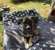 Liebe Hundefans für ENIA gesucht