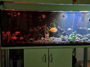 aquarium 560 l mit unterschrank