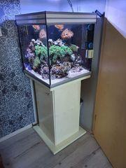 Verkaufe Meerwasseraquarium - Seewasseraquarium mit Unterschrank