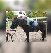 Reitbeteiligung für ein Pony 1