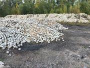 Alte Granit Pflastersteine 15 x