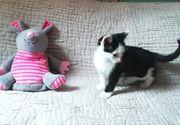 Zuckersüße Katzen-Babies ab sofort