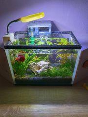 Aquarium cc10L