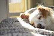 Wir bieten Hundebetreuung Hund Urlaubsbetreuung