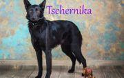 Mischlingshündin Tschernika sucht liebevolle Menschen