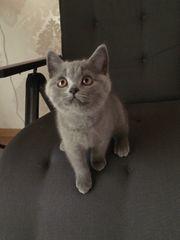 Bkh SKF Kitten