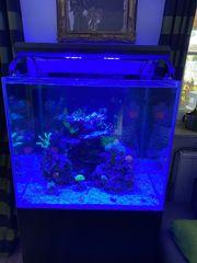Meerwasseraquarium Aquarium 70x70x60