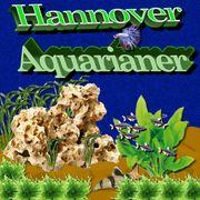 Aquarium Reinigung Pflege und Betreuung