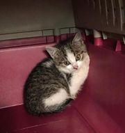 Spenden gesucht für Katzenmutter mit