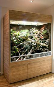 Terrarium für Taggeckos Phelsumen unser