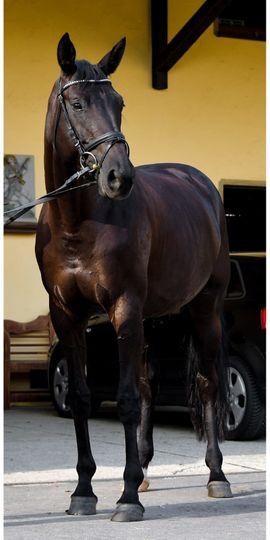 Pferde in Stetten kaufen und verkaufen bei