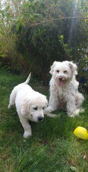 Hundebetreuung- Hundesitter
