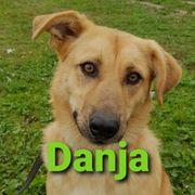 Rüde Danja sucht seine Familie