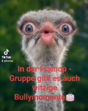 Französische Bulldogge Gruppe FB