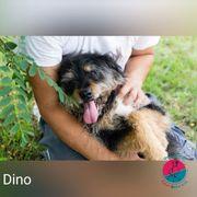 Dino - Sucht ein sicheres Körbchen
