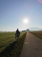 suche Reitbeteiligung Reiterin sucht Pferd