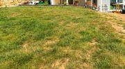 Grundstück Baugrundstück gesucht Weiden Umgebung