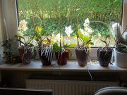 Orchideen und andere Pflanzen suchen