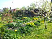 Kleingarten in Zeulenroda West abzugeben -