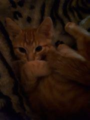 Garfield sucht ein neues zuhause