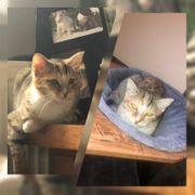 Kitten Katze Alari kastriert geimpft