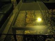 Glastische-Set zwei Tische mit geschmiedetem