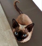 Katzenbetreuung in Roth
