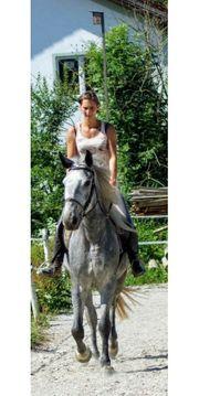 Super Stute perfektes Pferd wer