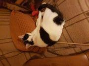 Liebe Katze in liebevolle Hände