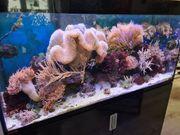 Meerwasser Aquarium 400 Liter