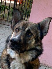 DAOS - Der Hund mit dem
