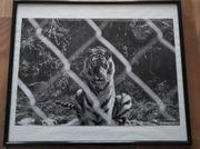 4x Bilderrahmen schwarz 40x50 cm