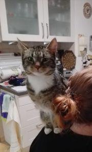 Katze Emma vermisst