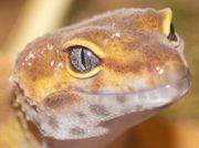 Reptiliengruppe Bioaktivhaltung