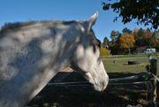 Sechs nette Pferde suchen Dich