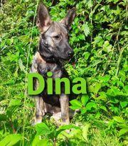 Welpe Dina 4 Monate alte