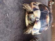 Landschildkröten und Sumpfschildkröten Babys