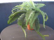 Künstliche Pflanzen Farn