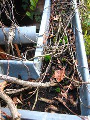 Dachrinnen-Reinigung Laub und Schmutz aus