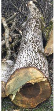 Holzstamm Nuss