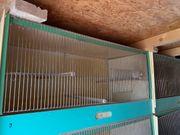 Zuchtboxen 160 x 40 und