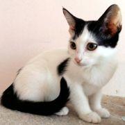 Kuscheliges Kätzchen Gulia möchte Dein