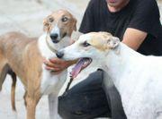 Hund Lionell sucht neues Körbchen