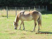 Pferde Grundstück zu Verpachten
